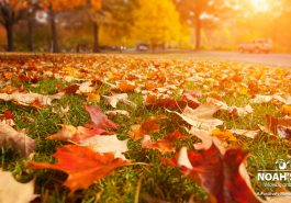 picture-of-tree-with-autumn-leaves